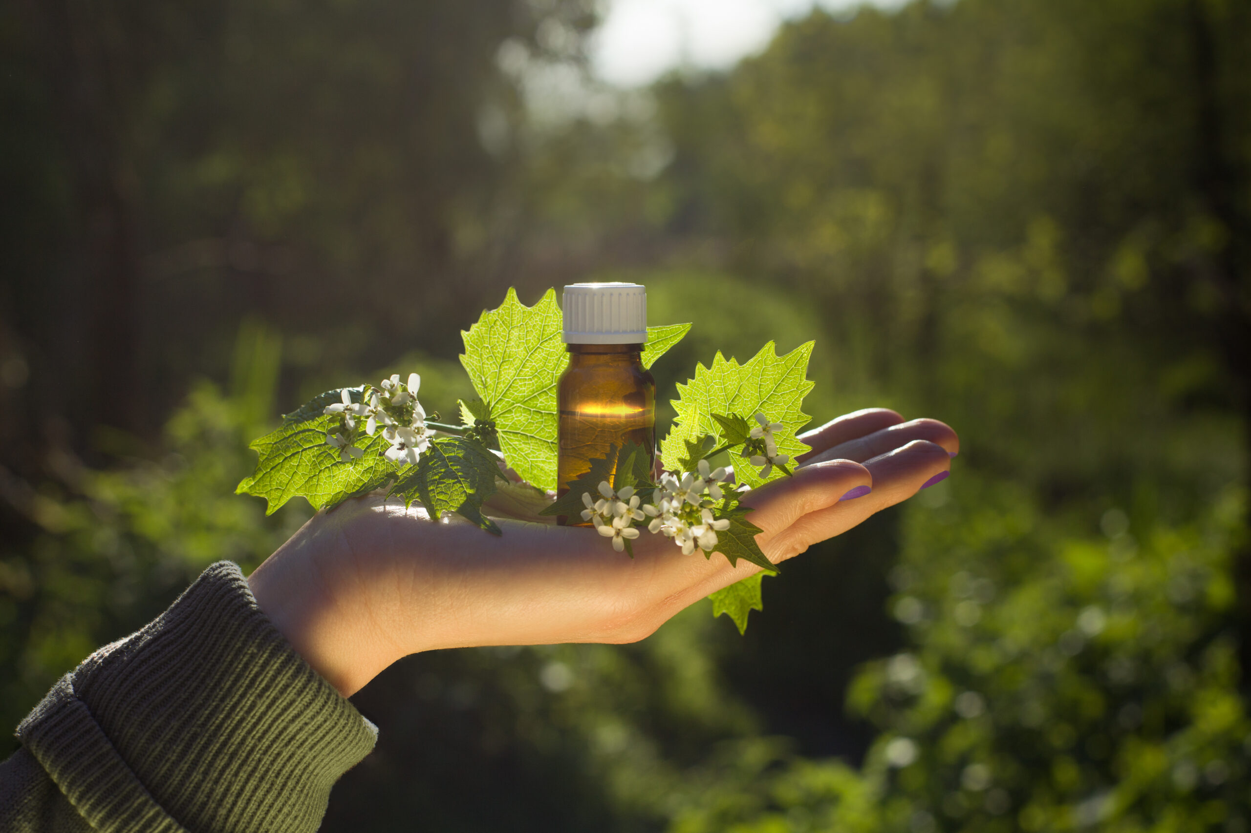 Hand with aroma oil in bottle. Bach flower essence and blooming nettle.